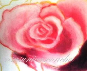 Formando la primera rosa
