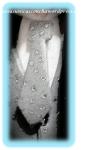 R. 236 Corbata del novio, este fue su secreto